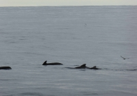 160803_Perfect_weather_for_whale_watching